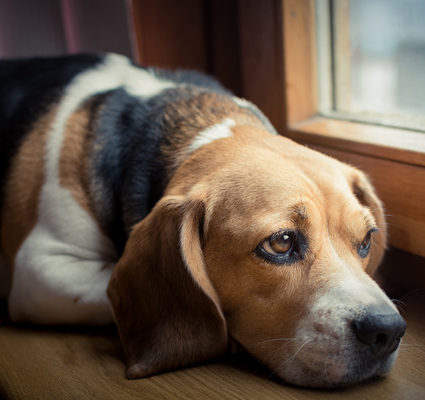 Sad dog on the window sill - Image