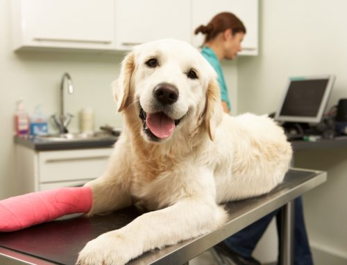 Protection for the Unexpected: The Benefits of Pet Health Insurance