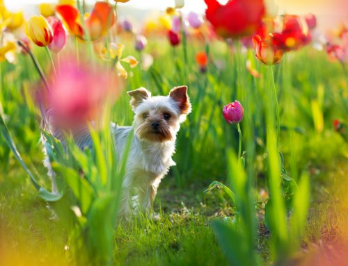 Household and Garden Toxins for Pets