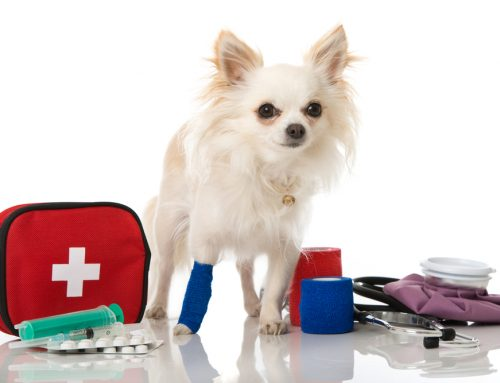 Common Pet Injuries and First Aid Care