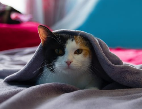 Cold Weather Safety for Your Pet: 6 Ways to Avoid Winter Woes