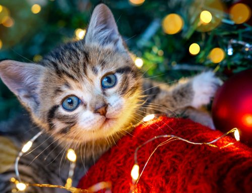 The 12 Days of … Pet Holiday Hazards
