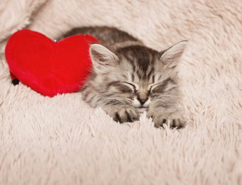 10 Things You Need To Know About Heart Disease in Pets