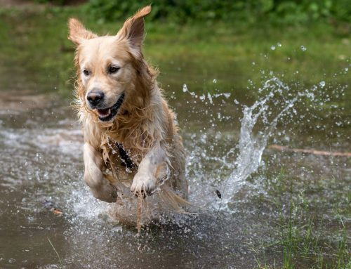 Water Safety Guidelines for Pet Owners