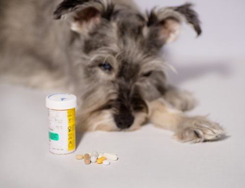 7 Steps to Successful Pet Medication
