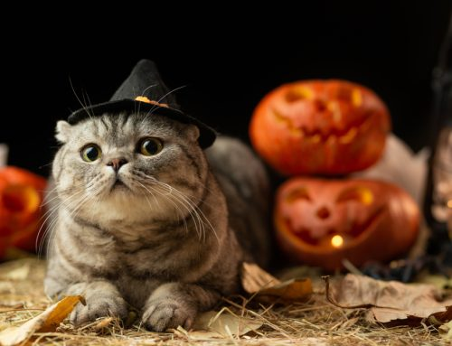 Top 5 Ways to Keep Pets Safe—And Still Have Fun—This Halloween